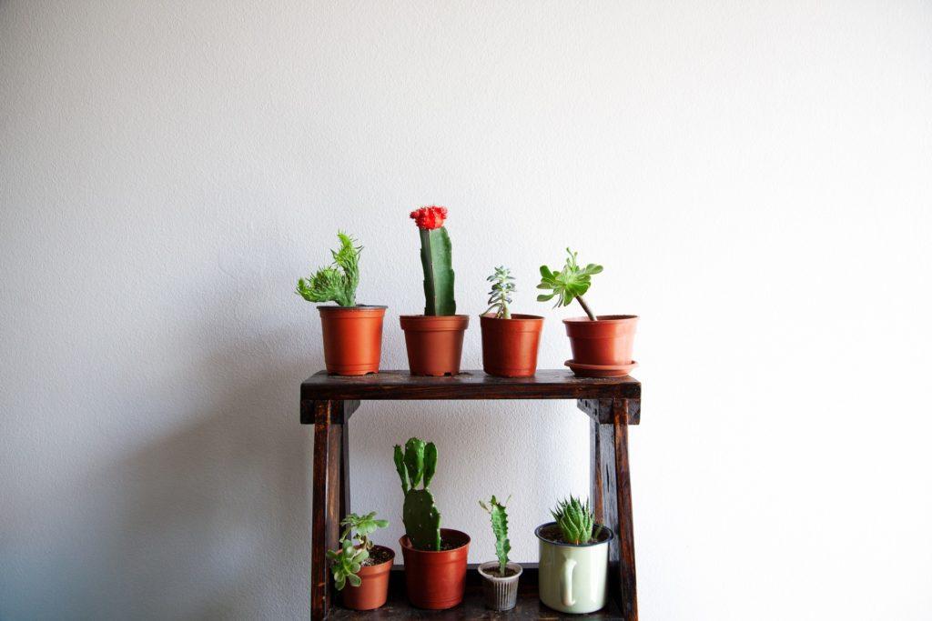 Sun(light): Cactus and succulent home design
